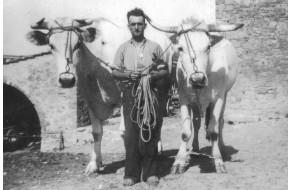 1947 - Il Viti con le bestie da lavoro 47ef17af234