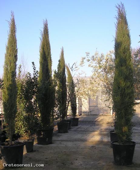 Rabazzi piante crete senesi for Vendita piante ornamentali